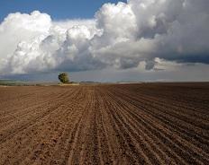 Пахать не перепахать. Какая страна имеет самые большие сельхозугодья на одного гражданина